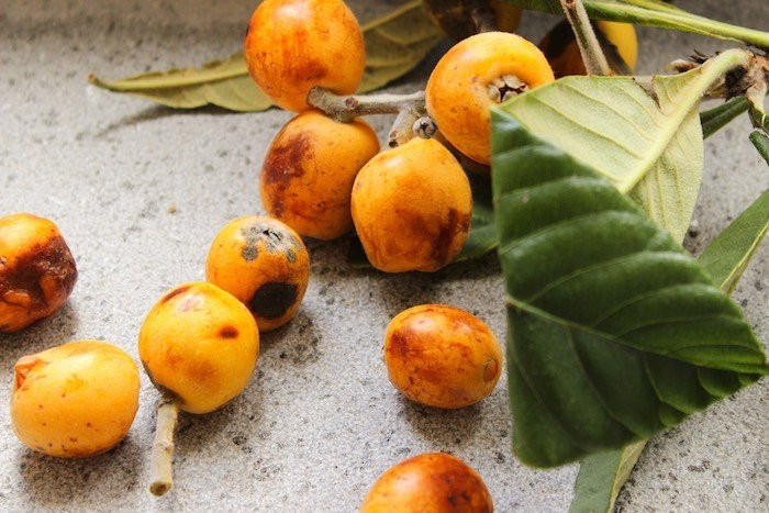 a close up of loquats on a table, Italian nespole