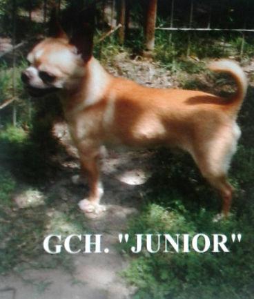 junior3.jpg