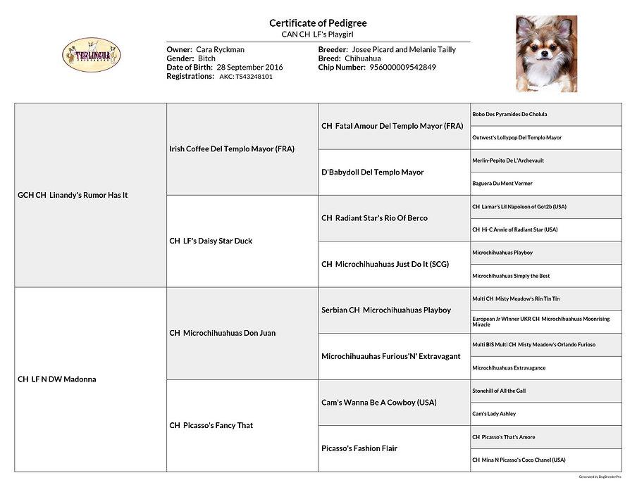 pedigree_LF's Playgirl_2020-08-21.jpg