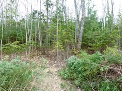 5-13-16 thinned woods