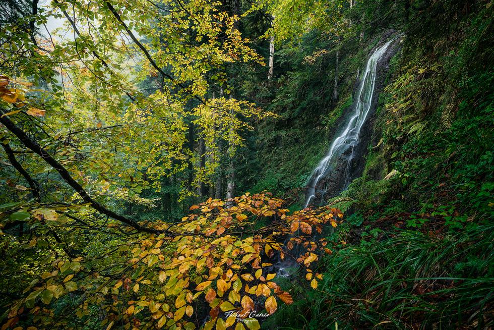 Couleur d'automne dans le Sancy .