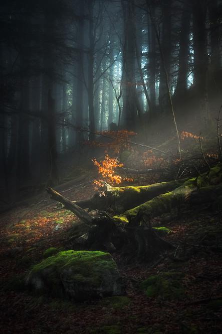 Forêt de Ceyssat