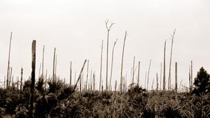 02. Paperlands