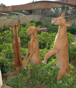 HANGING 3 DOG