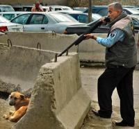 SHOOTING DOG IN IRAQ