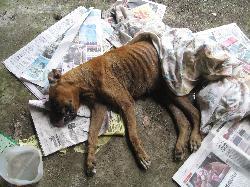 PHOTO A1 DEAD STARVED DOG CHEM PR.jpg