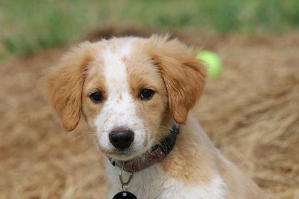 Pilot Pup Autumn Alex Pacheco 600 Million Dogs