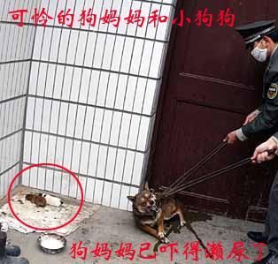 A1 DOG 2 PUPS CHOKE 2  OF 3 PICS.jpg