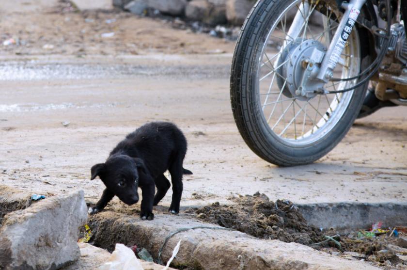Black stray puppy India Alex Pacheco 600 Million Dogs