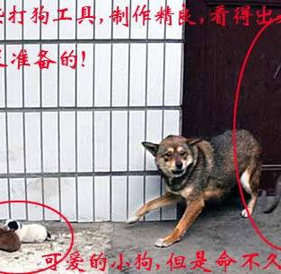 A1 DOG 2 PUPS CHOKE 1 OF 3 PICS.jpg