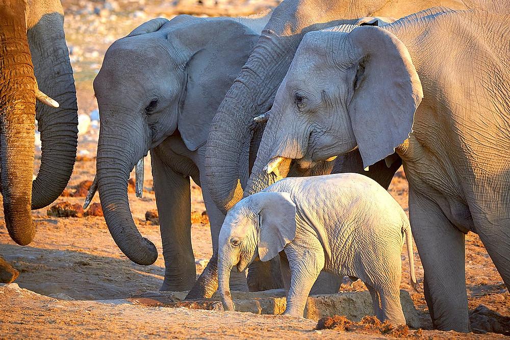 Elephant family Alex Pacheco 600 Million Dogs