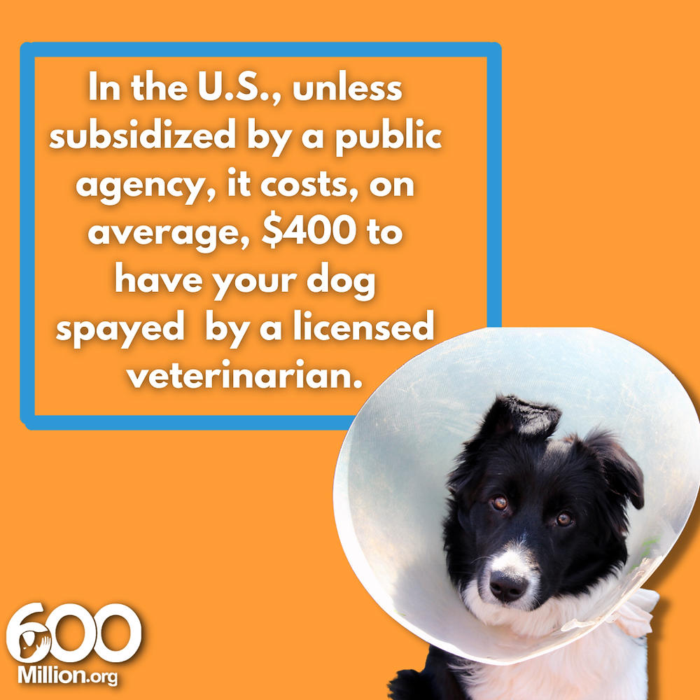 cost of spay and neuter Alex Pacheco 600 Million Dogs