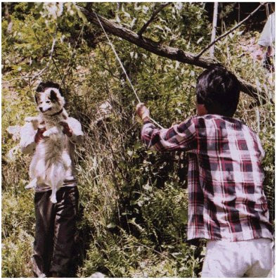 Two men hanging a stray dog from a tree.