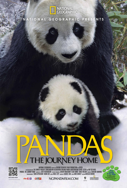 Panda Key Art Poster