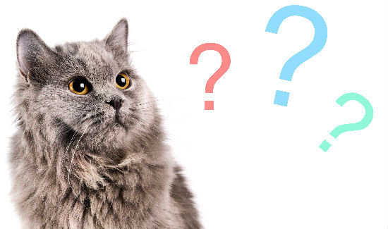 Cats-Question-Day.jpg