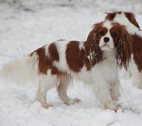 LF Chilli Snow.png