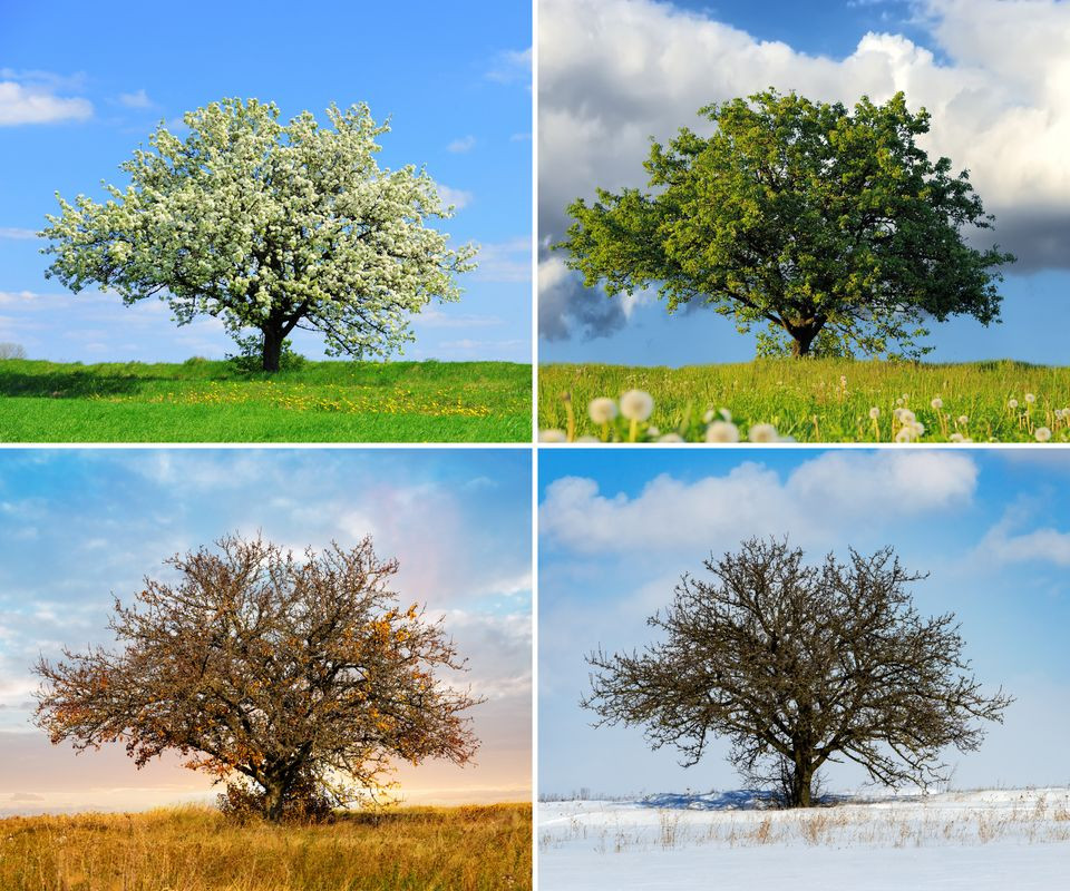Alone big tree in four seasons | When a family or friend grieves, how do they process their pain? | Balanced Wheel