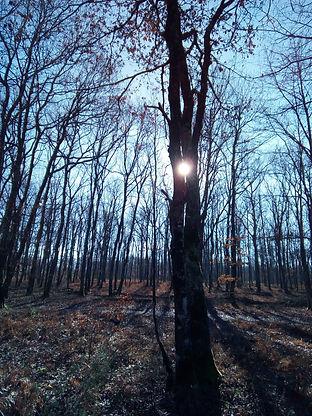 soleil-passe-a-travers-deux-arbres-foret.jpg