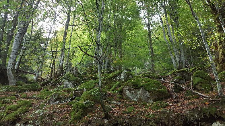 arbres-verts-en-montage.jpg