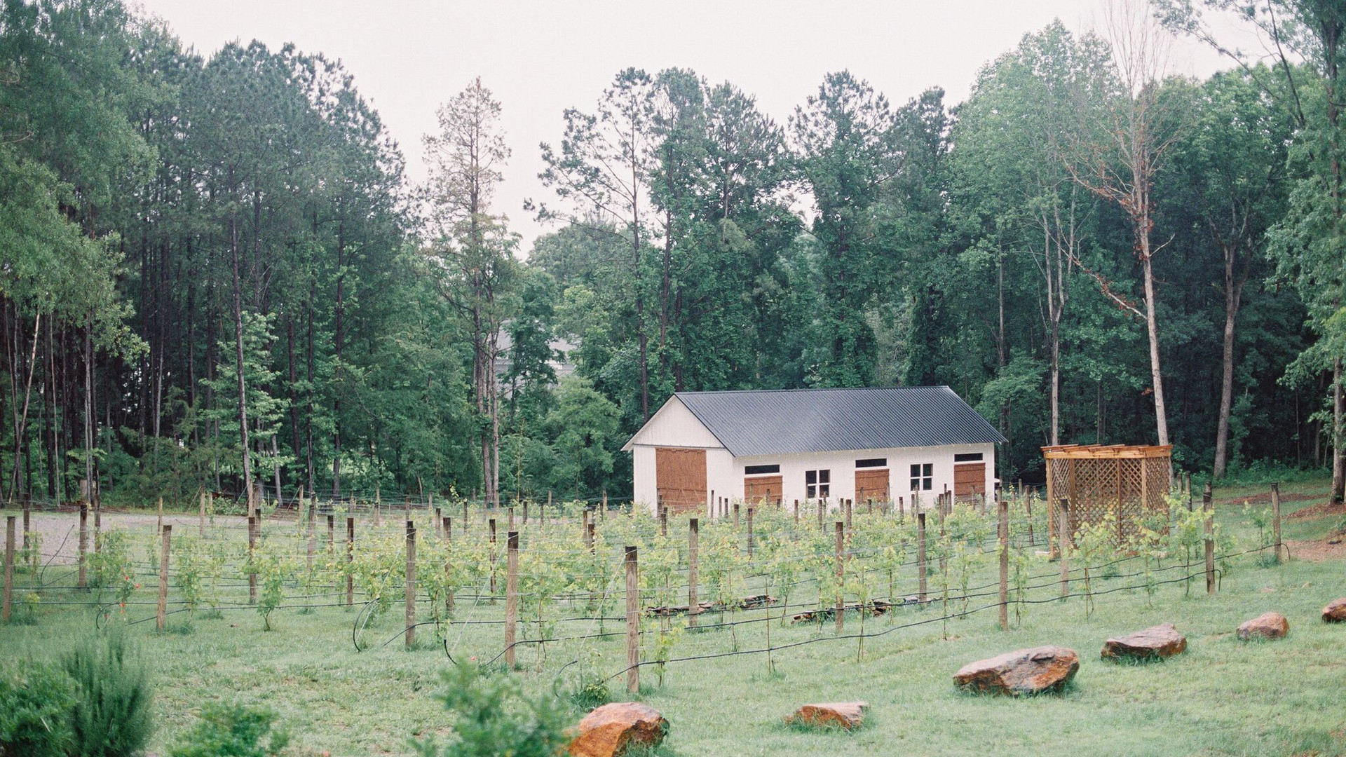 Vineyard, barn, grapes, wedding