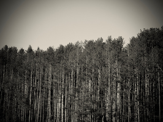 Brown County Trees