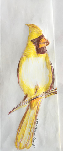 Plump Yellow Cardinal on Branch