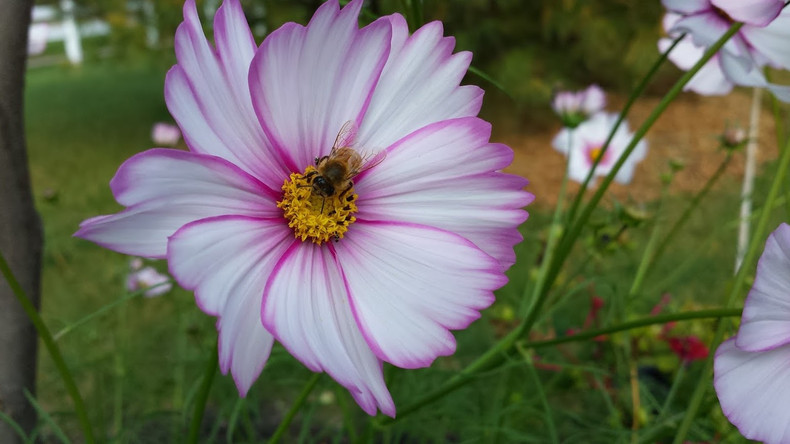 Cosmos & the Bee