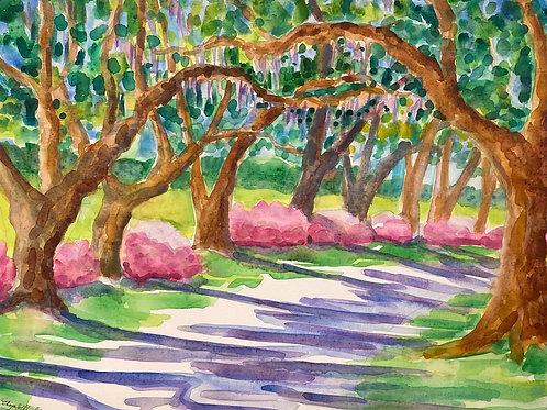 Azaleas along the Oak Alley/ 16x20 / Watercolor on Canvas