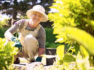 Saját dísznövény és konyhakertet alakíthat ki magának, s ápolhatja az ott növekvő növényeket.