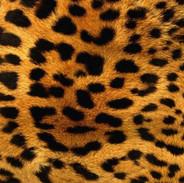leopard-pattern-930173.jpg