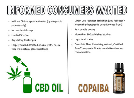 Let's Talk With an Expert About CBD Vs. Copaiba