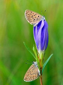 butterflies parc brenne - Copy.jpg