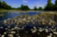 river creuse.jpg