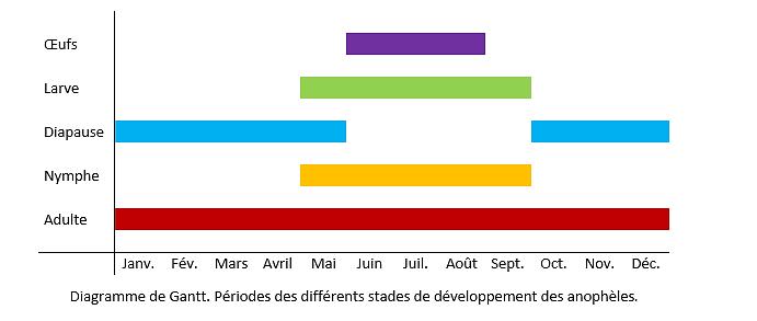 Diagramme de Gantt - Anopheles