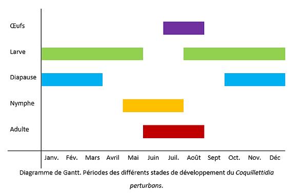 Diagramme de Gantt - Coquillettidia perturbans
