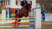 SIEG für CAVOFIT-Reiterin Nina Maier mit ihrem Hit!