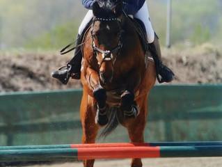 CAVOFIT Reiter Nina und Reinhold Maier sehr erfolgreich mit Sieg und Platzierungen beim Turnier in G