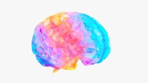 Diana_Karamacoska_neuroscience