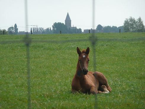 Passchendaele, crest farm, Tyne Cot Cemetery, Ypres, Flanders