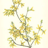 downtown barrie forsythia finds vintage