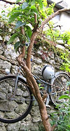 Bike up a tree