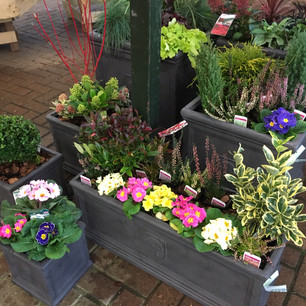Containers for winter interest