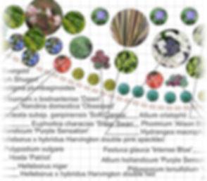 Grandiflorus Planting Plan.jpg