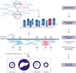 Methylomic analysis of plasma DNA