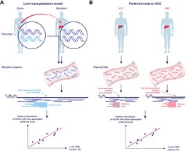 Schematic illustration of the principle of identifying cell-free DNA end signatures