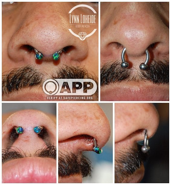 Septum 101 The Nose Knows What To Look For From A Safe Septum