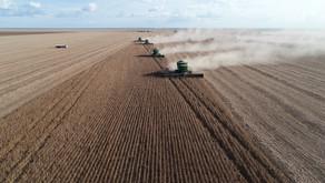 EFICIÊNCIA NO AGRO | Safra salva economia