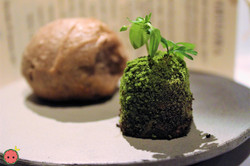 Moss Butter and Bread of the Forest 2010