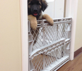 Living better with dogs – management techniques, part 2: baby gates