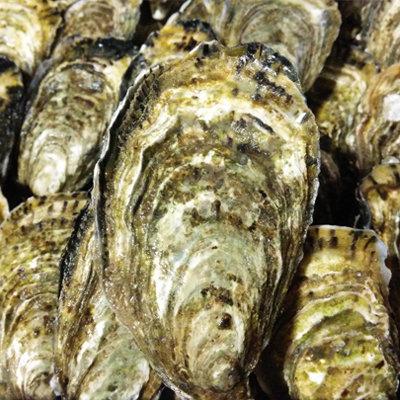 Large Premium Irish Oysters (Per Dozen)